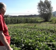 Pasiune şi voinţă duse la extrem – agricultură la 100 de km!  (VIDEO-Galerie FOTO)